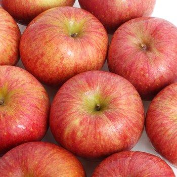 [구성농협]기다리다 지친 맛있는 제철 부사 사과 맛보세요!